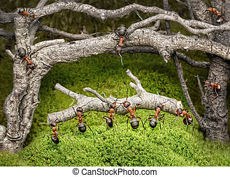 team of ants carries log in rusty forest