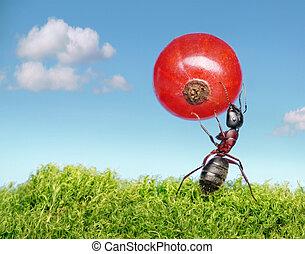 formiga, carrega, vermelho, groselha
