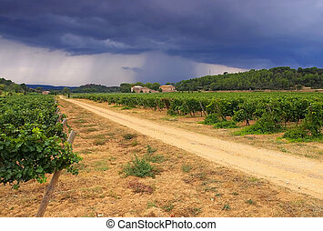 vineyard estate in Corbieres, landscape in southern France
