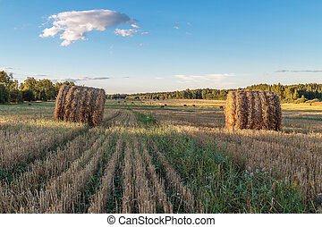The straw is pressed into bales in the field
