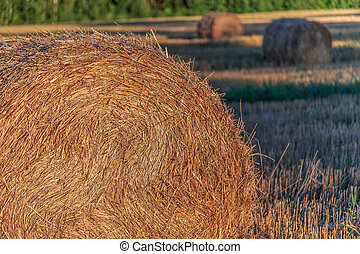 Straw pressed into bales, rural views summer evening
