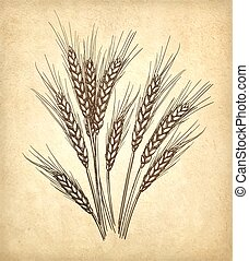 Vector illustration of wheat - Hand drawn vector...