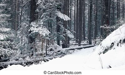 Man Walks In Forest With Snow Falling