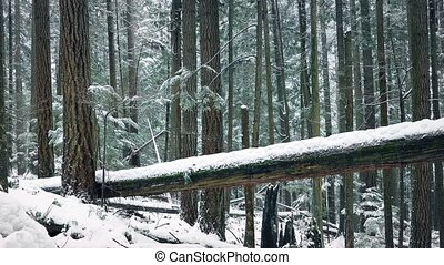 Moving Past Fallen Tree In The Snow - Dolly shot moving...