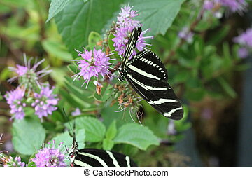 Butterflies on a flower in nature - View of Butterflies on a...