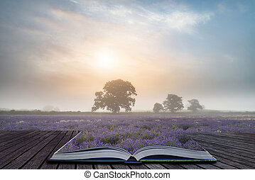 Beautiful dramatic misty sunrise landscape over lavender field in English countryside coming out of pages of book