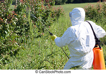 Farmer spraying toxic pesticides or insecticides in fruit...