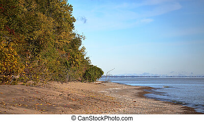 Eastern beach with treeline at Point Peele National Park