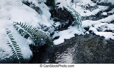 Stream In Snowy Forest Moving Shot - Dolly shot moving...