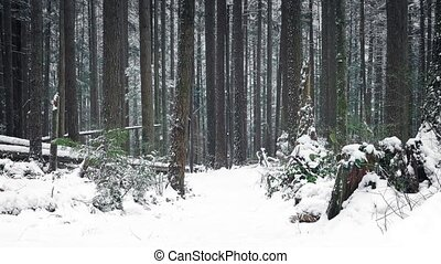 Passing Path Through Woods In The Snow - Moving past path...