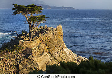 Lone Cyrpess Tree On The California Coastline - Lone cypress...