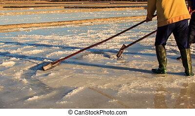 Backside Men Work on Salt Field at Sunset - backside view...