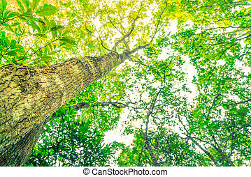 Beautiful green Forest trees . ( Filtered image processed...