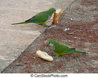 Green Parrot bird animal - A Green Parrot (Psittacines)...