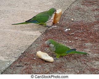 Green Parrot bird animal - A Green Parrot (Psittacines)...