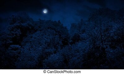 Large Woodland Trees With Moon Above