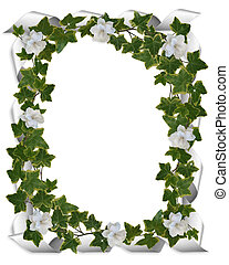 Ivy ribbons and gardenias border - Image and illustration...