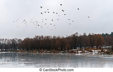 flock of birds flew up on the ice lake and snowy forest...