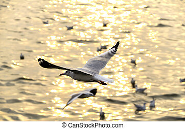 Migrate seagull in sunsets.