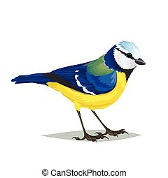 Realistic bird Eurasian blue tit on a white background. -...