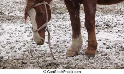 Horse under snow at the farm at cold winter - Horse under...