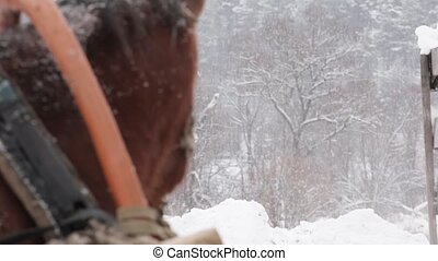 Horse brown face under snow - close-up