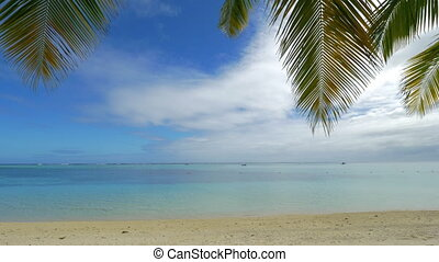 Ocean skyline, beach and palm branches - Tropical scene with...