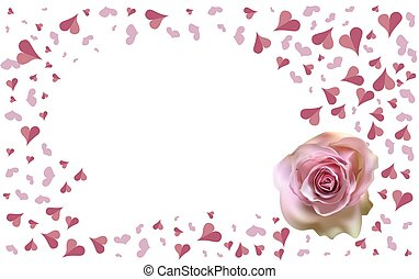 Delicate pink Rose on a blurred white background