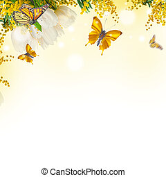 Amazing tulips with mimosa and butterflies background of...