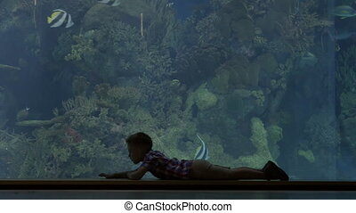 Child crawling near the big aquarium - Boy in oceanarium...