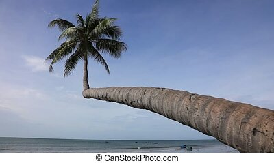 Palm and beach - Alone coconut palm tree on the beach on the...