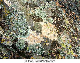 Granite mossy, texture, close-up
