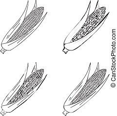 Hand drawn illustration of corn