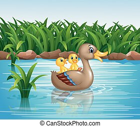 Duck family swimming