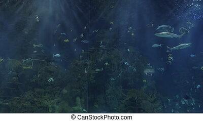 Children silhouettes against huge aquarium
