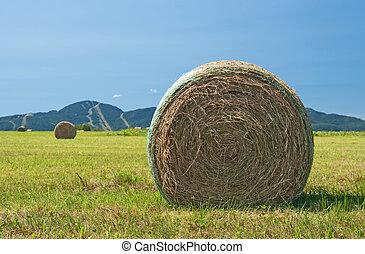 Bales of hay in the green field