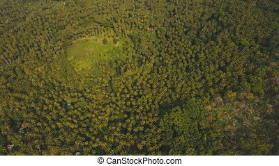 Aerial view Coconut palm trees plantation in Philippines. -...