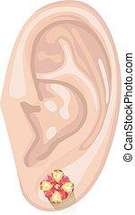 Human ear & earring - Human ear with an hanging earring...