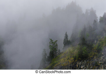 dense fog on mountain