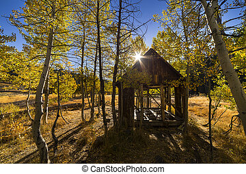 Old cabin in fall color aspen grove