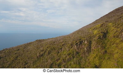 Trees and vegetation on the mountainside. Camiguin island...