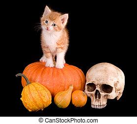 Cat on a pumpking