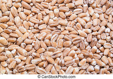 Wheat cereal, grains background or texture