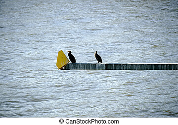 Cormorants - Two cormorants sit on a pole with a traffic...