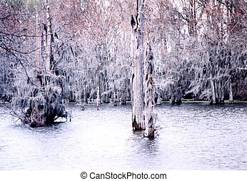 Mississippi trees on a Black Bayou March 2002 - Trees on a...