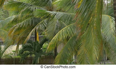 Garden with coconut palms
