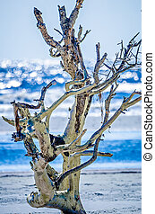 coastal scenes around folly beach south carolina