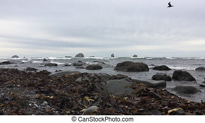 Oregon Coast Landscape low angle - Oregon Coast Landscape...
