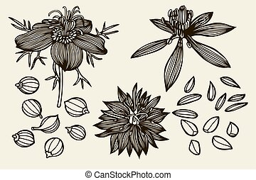 Sketch set of Nigella sativa flowers and leaves isolated on...