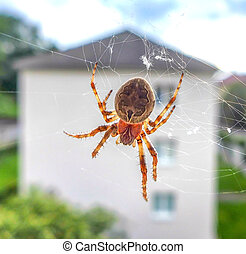 Spider on cobweb in window